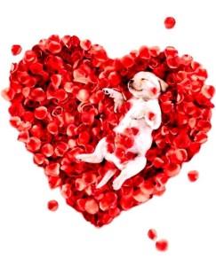 PACCC Valentine's Day Dog