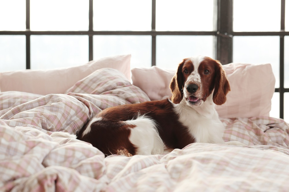 Guest Blog: Tips To Help Your Dog Transition When Moving Into A New